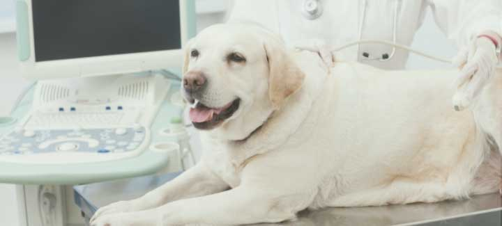 動物病院の保険
